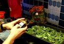 How To Make Kale Chips – The Healthiest Snack Recipe