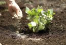 How To: Properly Apply Organic Fertilizer