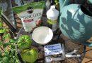 Using Organic Fish Emulsion or Fertilizer on Garden Vegetables: The Basics – The Rusted Garden 2013