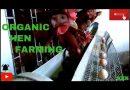 ORGANIC HEN FARMING | NADAN EGG | PROFITABLE | BV 380