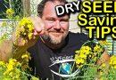 Seed Saving Tips Ep 1 – Dry Seeds | Organic Gardening