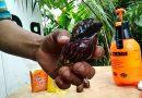 How to make organic natural pesticide