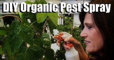 DIY Organic Pesticide Spray with Neem Oil, Peppermint Oil, Worm Tea