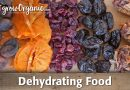 How to Dehydrate and Preserve Organic Fruit