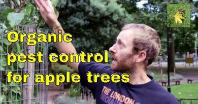 Organic pest control: Apple trees Aphids Scab Mildew & fungi. Gardening & allotment fruit tree care.