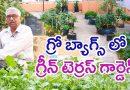 Organic Green Terrace Garden in Grow Bags    Hariprasadrao    Dilsukhnagar    Rythunestham