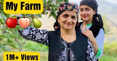 My Farm Tour    Apple Orchard    Organic Farming    Shimla, Himachal Pradesh    Jyotika Dilaik
