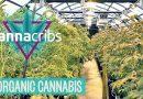 Inside America's Top Organic Cannabis Farm: Oregon's Yerba Buena